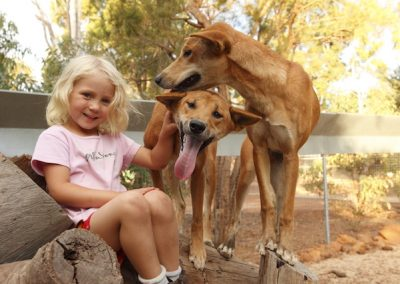 Max and Mia - The first Dingoes to call Kaarikin home